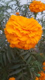 Imagen cercana de la flor fotografía de archivo