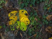Imagen colorida de los esqueletos de la hoja Imagen de archivo