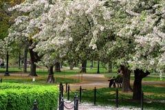 Imagen común de Boston común y jardín público, los E.E.U.U. fotos de archivo