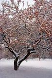 Imagen común de un invierno que nieva en Boston, Massachusetts, los E.E.U.U. Fotos de archivo