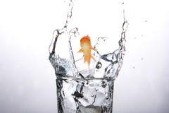 Imagen compuesta de la natación del pez de colores con la boca abierta contra la pantalla blanca 3d stock de ilustración