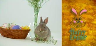 Imagen compuesta del conejito de pascua con el saludo Imágenes de archivo libres de regalías