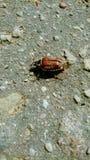 Imagen con el abejorro Imagenes de archivo