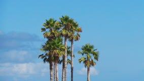 Imagen con las palmeras en la playa con una visión y un cielo azul despejado imagen de archivo libre de regalías