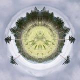 Imagen conceptual de los árboles altos de la picea y de pino en la hierba verde en un fondo de un círculo del cielo nublado gris  Fotografía de archivo libre de regalías