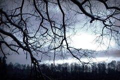 Imagen conceptual del árbol. Fotos de archivo libres de regalías
