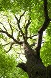 Imagen conceptual del árbol verde. Imagen de archivo