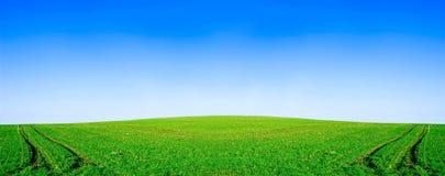Imagen conceptual del campo verde y del cielo azul. Fotografía de archivo