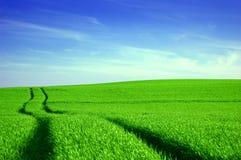 Imagen conceptual del campo verde y del cielo azul. Foto de archivo libre de regalías
