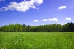 Imagen conceptual del campo y del bosque. Fotografía de archivo libre de regalías