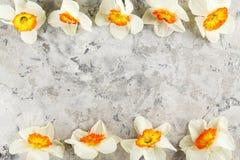Imagen conceptual del humor de la primavera Flores estacionales en fondo brillante imagen de archivo libre de regalías