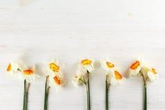 Imagen conceptual del humor de la primavera Flores estacionales en fondo brillante imagenes de archivo