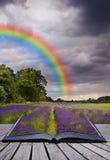 Imagen creativa del concecpt de los campos de la lavanda Imagen de archivo libre de regalías