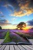 Imagen creativa del concepto de los campos de la lavanda de la puesta del sol Foto de archivo