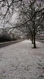 Imagen de árboles en nieve Imágenes de archivo libres de regalías