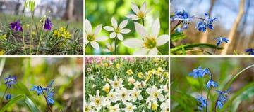 Imagen de diversas flores en el primer del jardín Fotos de archivo