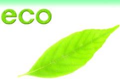 Imagen de Eco Foto de archivo libre de regalías