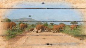 Imagen de elefantes en la madera vieja fotografía de archivo libre de regalías