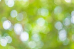 Imagen de falta de definición de Bokeh abstracto del color verde del árbol Foto de archivo libre de regalías