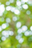 Imagen de falta de definición de Bokeh abstracto del color verde del árbol Fotografía de archivo libre de regalías