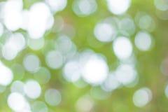 Imagen de falta de definición de Bokeh abstracto del color verde del árbol Foto de archivo