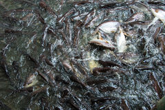 Imagen de falta de definición de movimiento, imagen del tiburón iridiscente Fotografía de archivo libre de regalías