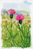 Imagen de flores púrpuras Foto de archivo libre de regalías
