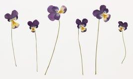 Imagen de flores secadas en varias variantes Fotografía de archivo libre de regalías
