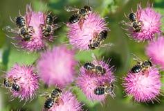 Imagen de flores y de abejas en el primer del jardín Imagenes de archivo