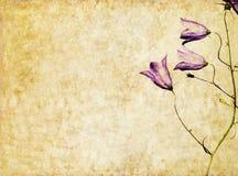 Imagen de fondo con los elementos florales Foto de archivo
