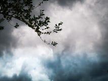 Imagen de fondo, nubes coloreadas hermosas y ramita foto de archivo