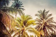 Imagen de fondo de palmeras tropicales y del cielo azul foto de archivo