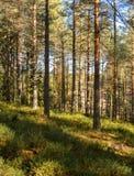 Imagen de fondo de un bosque/del bosque con la luz y las sombras fotos de archivo
