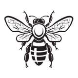 Imagen de la abeja Imagen de archivo libre de regalías