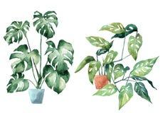 Imagen de la acuarela con las hojas tropicales y las hojas de plantas interiores ilustración del vector