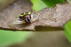 Imagen de la araña del cangrejo de Halloween Foto de archivo