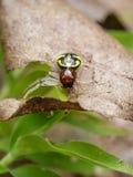 Imagen de la araña del cangrejo de Halloween Fotos de archivo