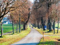 Imagen de la avenida del otoño con las hojas y el brillo del sol fotos de archivo libres de regalías