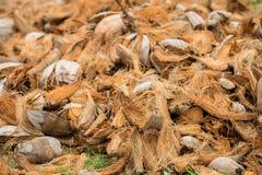 Imagen de la cáscara seca del coco Fotos de archivo