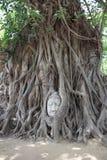 Imagen de la cabeza de Buda en Wat Mahathat fotografía de archivo libre de regalías
