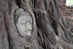 Imagen de la cabeza de Buda en Wat Mahathat fotos de archivo libres de regalías