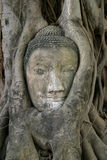 Imagen de la cabeza de Buda en Wat Mahathat en Ayutthaya Fotografía de archivo
