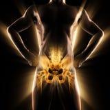 Imagen de la exploración de la radiografía de los huesos del ser humano Foto de archivo libre de regalías