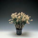 Imagen de la flor fotos de archivo