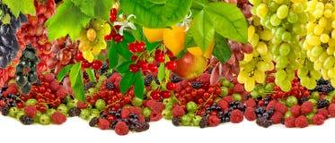 Imagen de la fruta en el primer del jardín Imagen de archivo