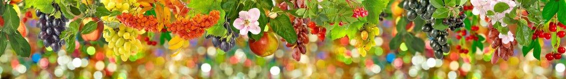 Imagen de la fruta en el primer del jardín Fotos de archivo
