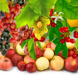 Imagen de la fruta madura en el jardín Foto de archivo