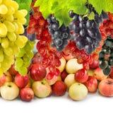 Imagen de la fruta madura en el primer del jardín Imagen de archivo