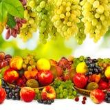 Imagen de la fruta madura en el primer del jardín Fotos de archivo libres de regalías