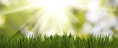 imagen de la hierba en el primer del jardín Fotografía de archivo libre de regalías
